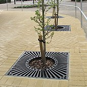 Tree Grilles & Tree Guards
